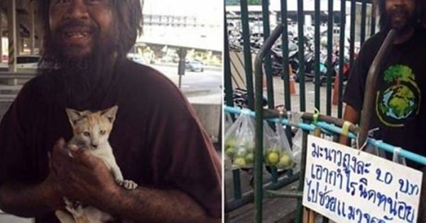 Homeless Man In Thailand Sells Limes On The Street Everyday To Buy Cat Food For …
