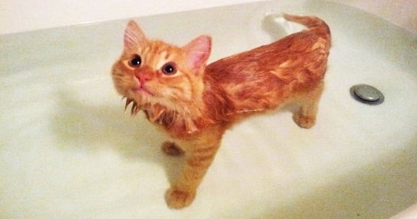 This Cat REALLY Loves To Take Baths