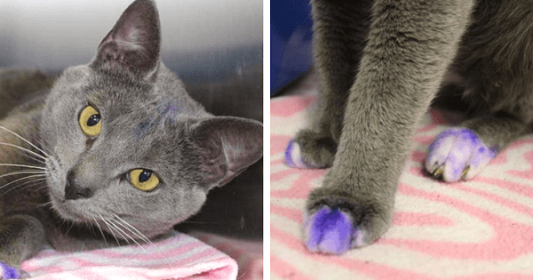 This Kitty's Paws Were Painted Purple For The Saddest Reason