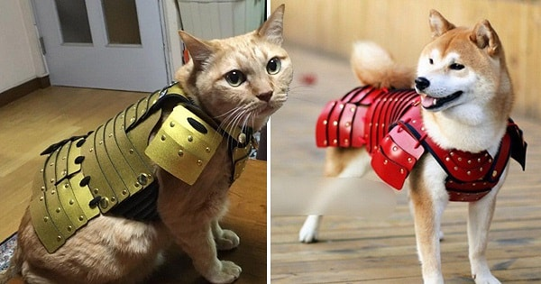 This Japanese Company Is Now Making Samurai Armor for Cats and Dogs