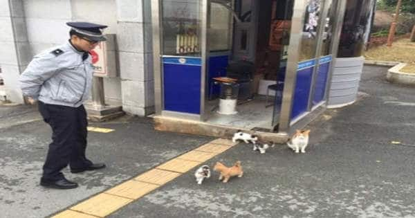 Stray Mama Cat Brings Her Family to Police Station That Becomes Their ..