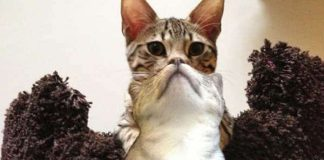 19 Of The Most Perfectly Timed Pictures of Cats Ever