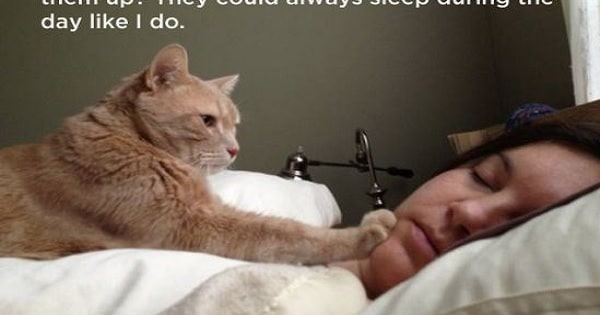 The 19 Deep Philosophical Thoughts Our Cats Have
