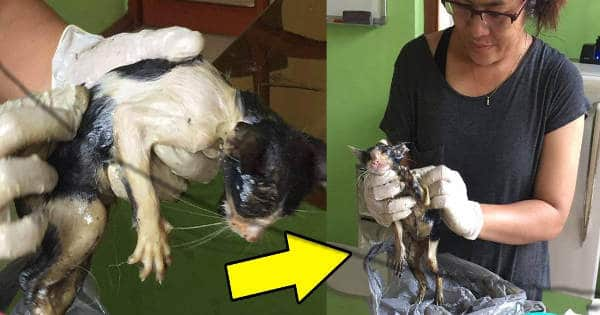 Poor Furry Baby Covered in Glue Was Discovered and Rescued by …