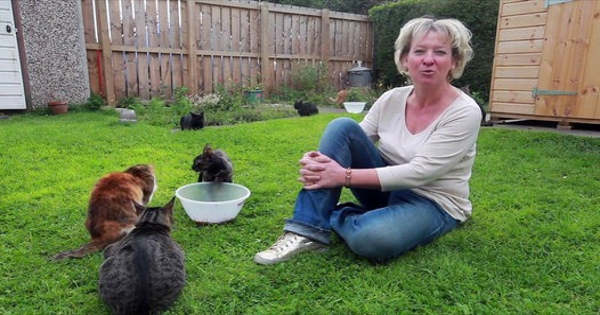 Compassionate Woman Rescues 40+ Stray Cats And Gave Them All A Second …