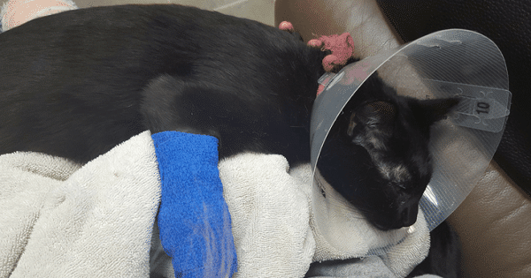 This Poor Cat Almost Died Because Of A Common Household Item