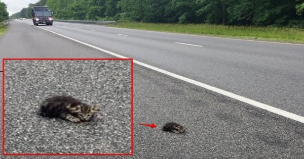 Woman Rescued Kitten From Busy Highway - What Happened Next Will REALLY Tick You Off