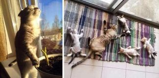 10 Cats Who Love Sun More Than Anything