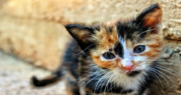 If You Have A Kitten, Then You Need To Know The Signs Of Fading Kitten Syndrome …