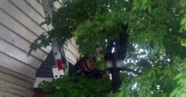 New Jersey Boy Rescued From Tree After Climbing It To Help Cat …