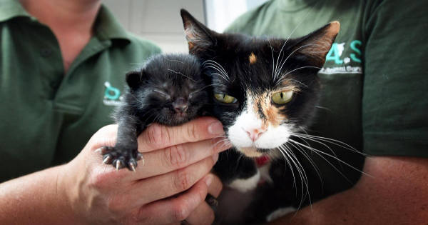 Cat Re-assuringly Nuzzles Kitten After She Was Dumped At …