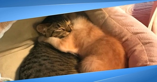 Foster Kittens Comfort Each Other After Their Families Get Adopted Without Them