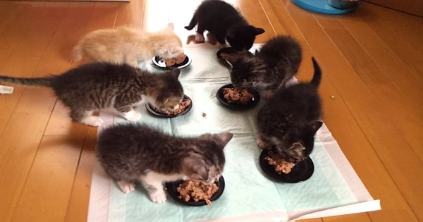 Lunch By 6 Kittens! Cuteness Overload!