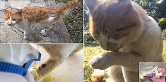 Cat Arrives At Family's Doorstep Meowing In Pain And Then ...