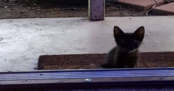 Woman Opens The Door To Find This Tiny Tortie Kitten Waiting For ...