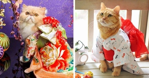 13 PICS – Cats In Kimonos Are A Thing Now – In Japan