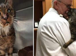Scraggly Senior Cat Finally Gets The Love He Always Wanted And Needed