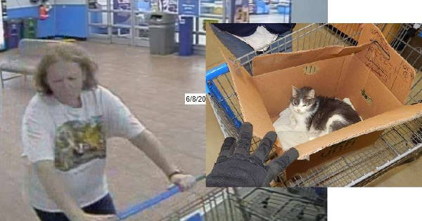 Photos Capture Woman Abandoning Sick Cat In A Walmart Shopping Cart