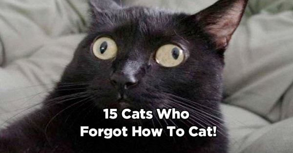 15 Cats Who Completely Forgot How To Cat