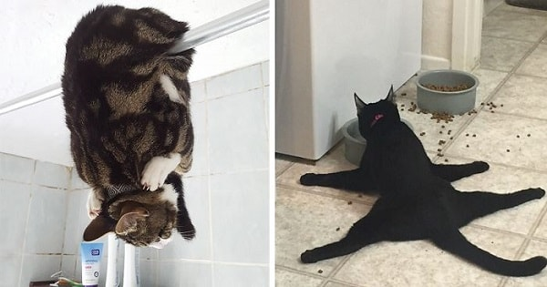 Cat People Shared Photos Of Their Cats Acting Weird (Feel Free To Post Your Own In A Comment)