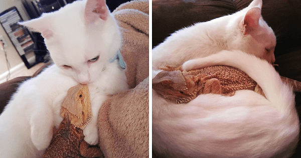 Dragon And Cat Become Two Extremely Unlikely Best Friends