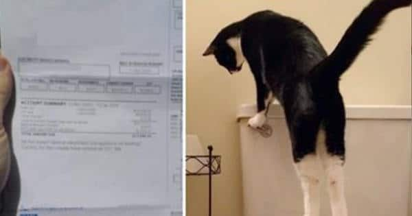 Man Had No Idea As To Why His Water Bill Is So High — Until One Day, He Caught His Cat ...