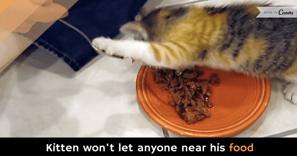 Kitten Literally Refuses To Let Her Human Anywhere Near Her Food