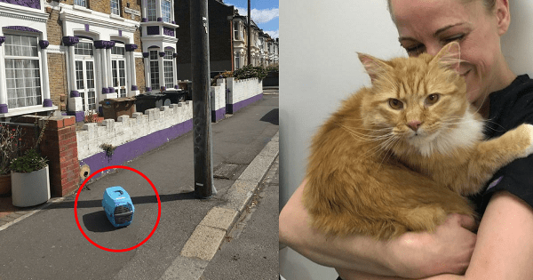 The One Meow That Literally Saved This Cat's Life
