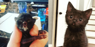 Adorable Abandoned Kitten Is Now Gracing The World With Her Permanent 'Blep'