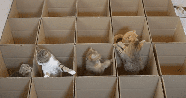 9 Cats and Their Love of Boxes – Just HILARIOUS