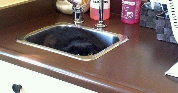 22 Hilarious Photos Of Cats Trying To Hide From The Vet