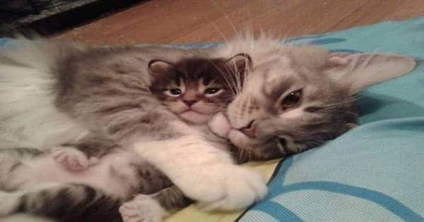 Completely Delightful Kittens Talking and Playing With Their Mamas