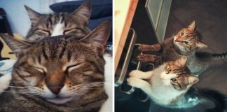 My Cat Took Care Of A Stray Kitty We Found In A Parking Lot, The Way He Thanked Him Will Melt Your Heart
