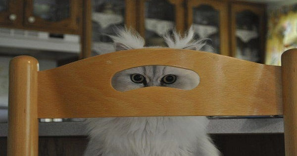 25 Creepy Kitties Who Want You To Realize – They're ALWAYS Watching You