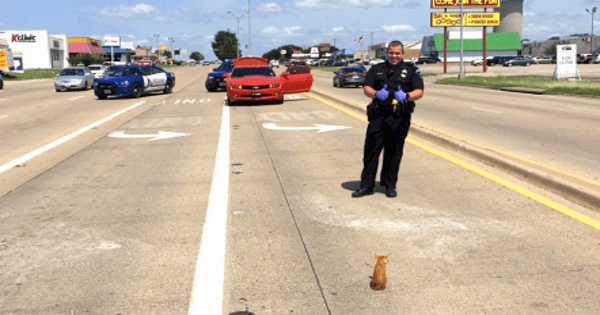Police Come to the Rescue After Adorable Kitten Literally Stops Traffic on Busy ...