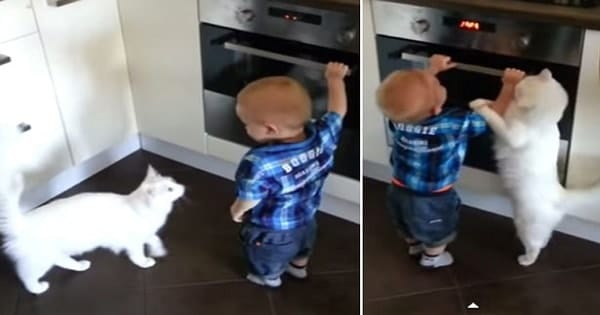 Caring Cat Stops Baby From Opening Oven