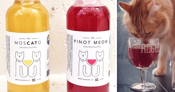 New Catnip Wine Lets Your Cat Be Your New Drinking Buddy