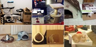Cat Owners Photograph Their Ungrateful Kitties Shunning Their Expensive Toys And Beds In Hilarious Ways