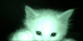 What Kittens Do At Night!