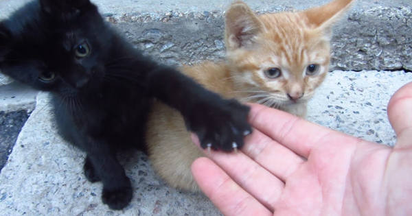 Presenting: The Kittens Who Live Under a Concrete Slab!