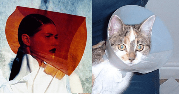 16 Kitties Doing A Better Modelling Jobs Than Their human Counterparts