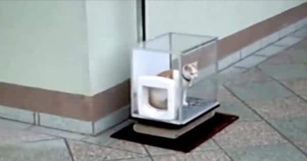 One Cat Owner Built His Cat Something Ingenious – Watch It In Action
