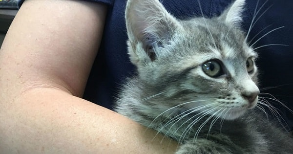 Kitten Rescue From The Inside Of A Wall At Construction Site Of New County Jail!