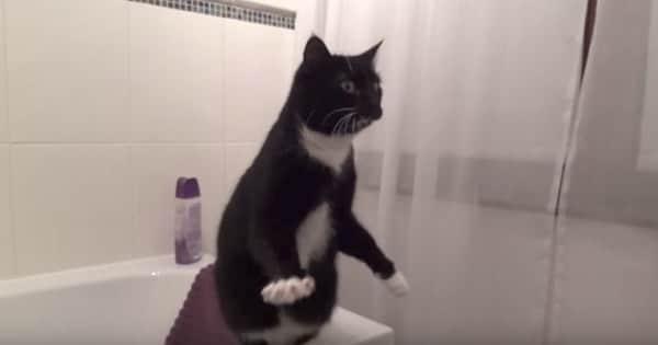 Watching This Adorable Cat Pose In A Mirror Will Leave You In Stitches