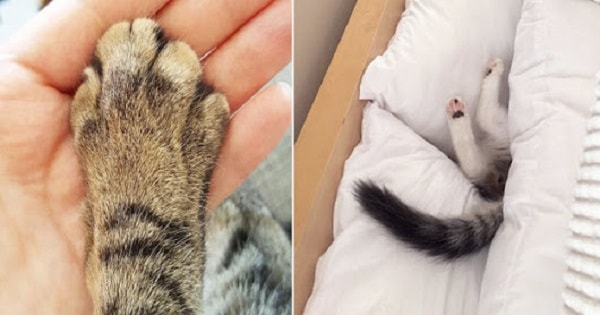 26 Important Firsts Just About Every Cat Owner Has Experienced