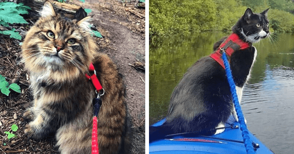 Horrible New 'Trend' For Walking Cats On Leashes May Actually Be Stressing Them Out!