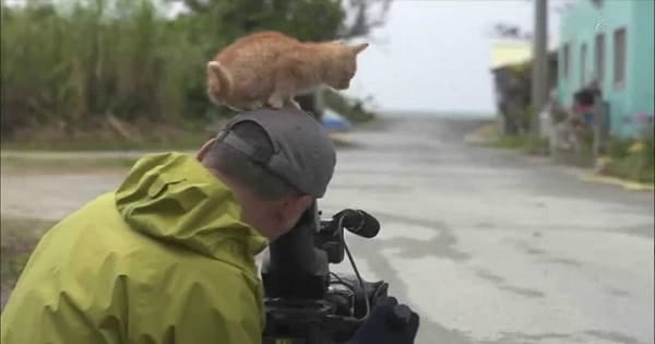 Adorable, Friendly Stray Kitten Tries To Claim Wildlife Photographer As His Forever Human …