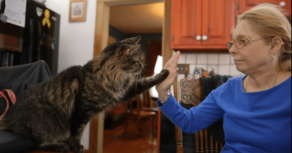 Woman Teaches Her Deaf Kitty Sign Language