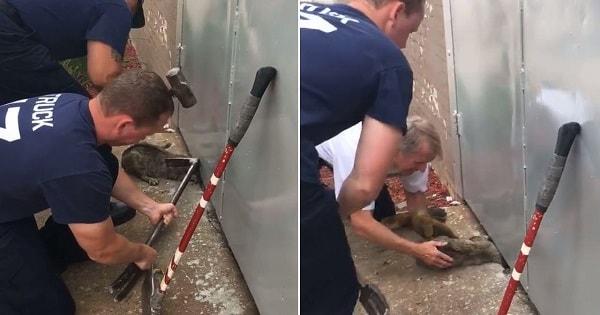 Fire Crew Rescues Poor Cat With Head Stuck In Metal Door