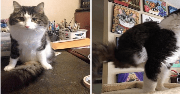 'Miracle Cat' Born With Just Two Legs And No Pelvis Doesn't Let Anything Stop Him